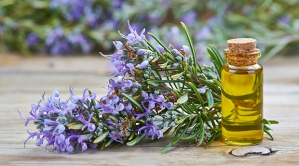 Rosemary-Essential-Oil-Uses
